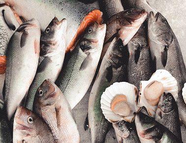 KIVU FISH : Production et vente des Poissons à Kamanyola